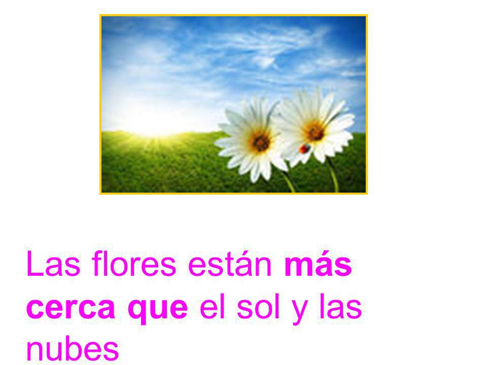 Las flores están más cerca que el sol y las nubes