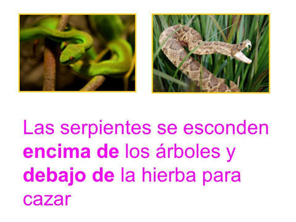 Las serpientes se esconden encima de los árboles y debajo de la hierba para cazar
