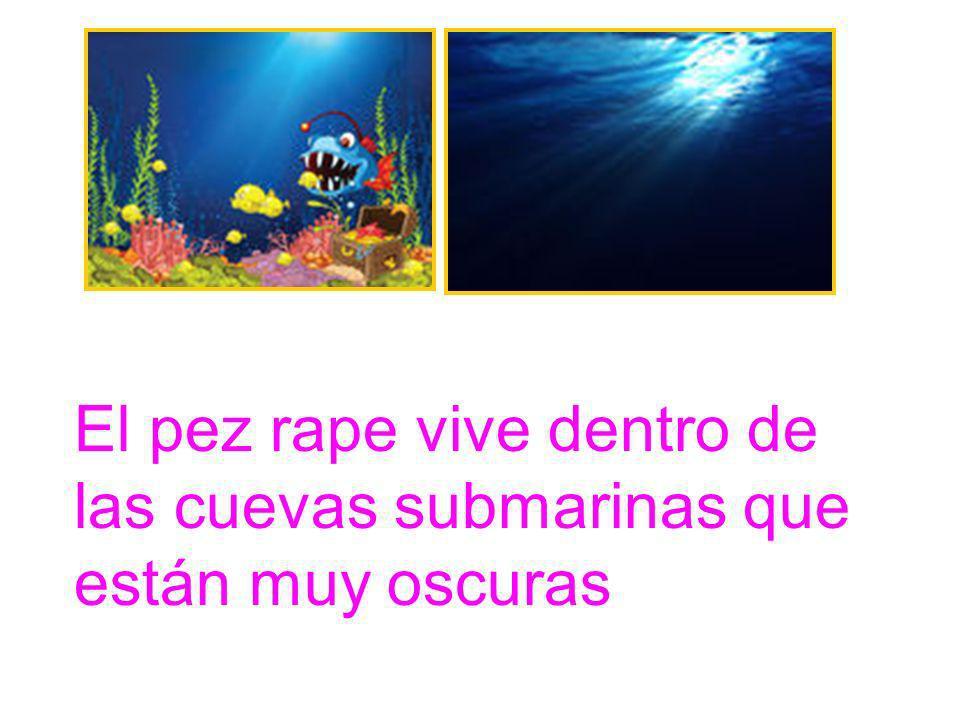 El pez rape vive dentro de las cuevas submarinas que están muy oscuras