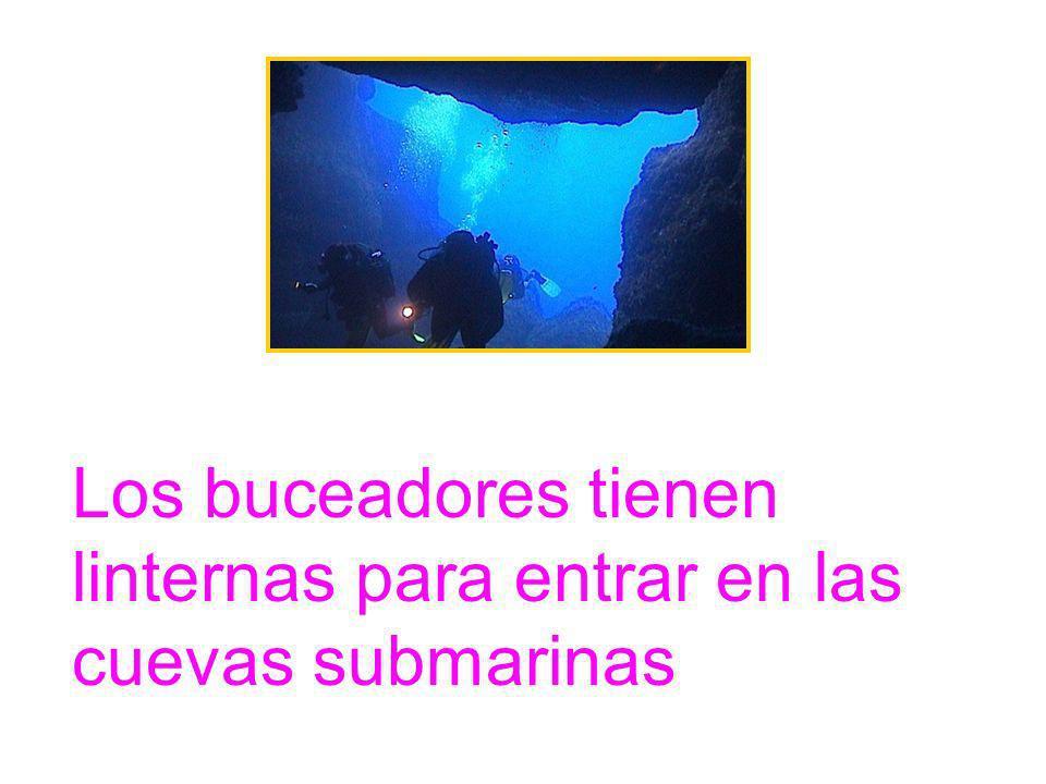 Los buceadores tienen linternas para entrar en las cuevas submarinas