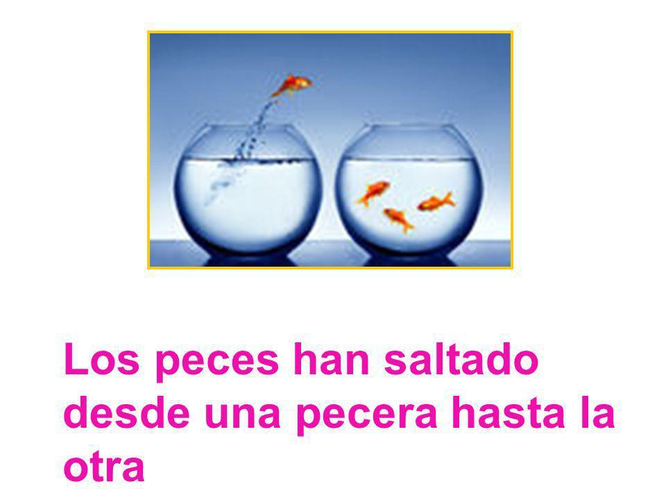 Los peces han saltado desde una pecera hasta la otra