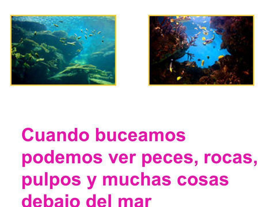 Cuando buceamos podemos ver peces, rocas, pulpos y muchas cosas debajo del mar