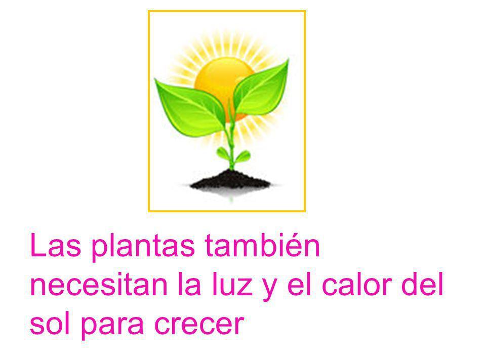 Las plantas también necesitan la luz y el calor del sol para crecer