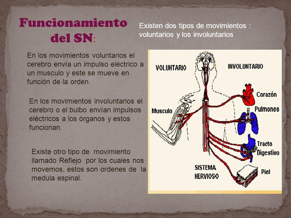 Funcionamiento del SN: