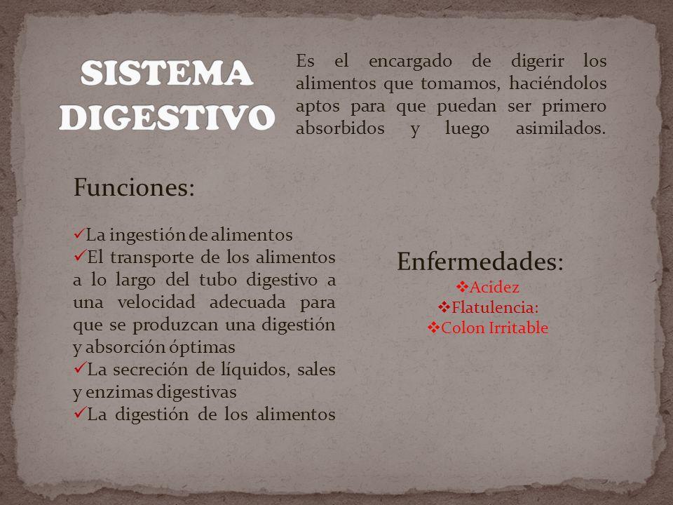 SISTEMA DIGESTIVO Funciones: Enfermedades: