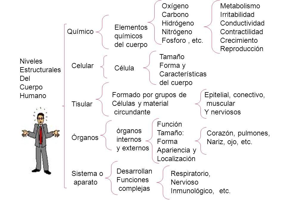 Oxígeno Carbono. Hidrógeno. Nitrógeno. Fosforo , etc. Metabolismo. Irritabilidad. Conductividad.
