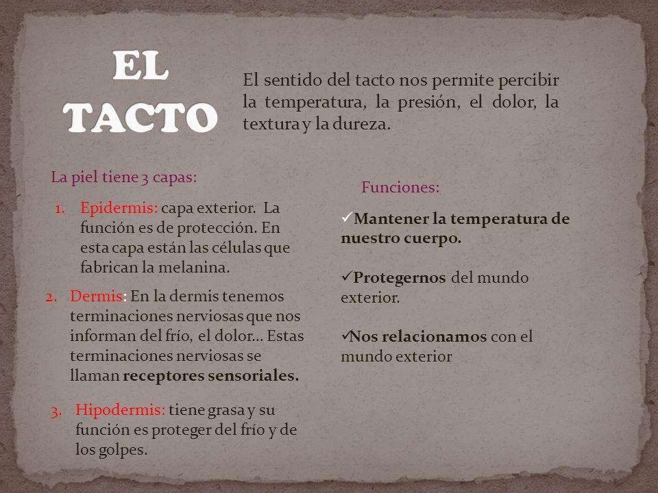 EL TACTO El sentido del tacto nos permite percibir la temperatura, la presión, el dolor, la textura y la dureza.