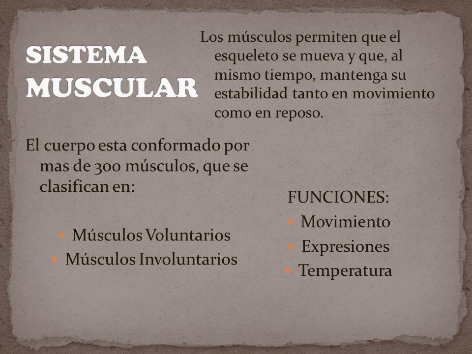Músculos Involuntarios