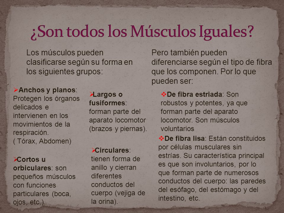 ¿Son todos los Músculos Iguales