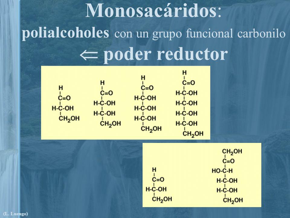 Monosacáridos: polialcoholes con un grupo funcional carbonilo  poder reductor