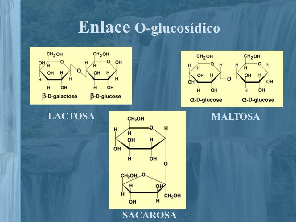 Enlace O-glucosídico LACTOSA. MALTOSA.