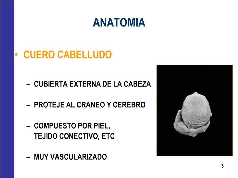 ANATOMIA CUERO CABELLUDO CUBIERTA EXTERNA DE LA CABEZA