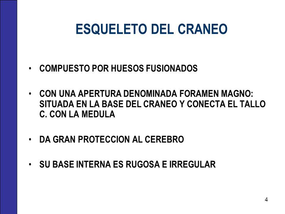 ESQUELETO DEL CRANEO COMPUESTO POR HUESOS FUSIONADOS