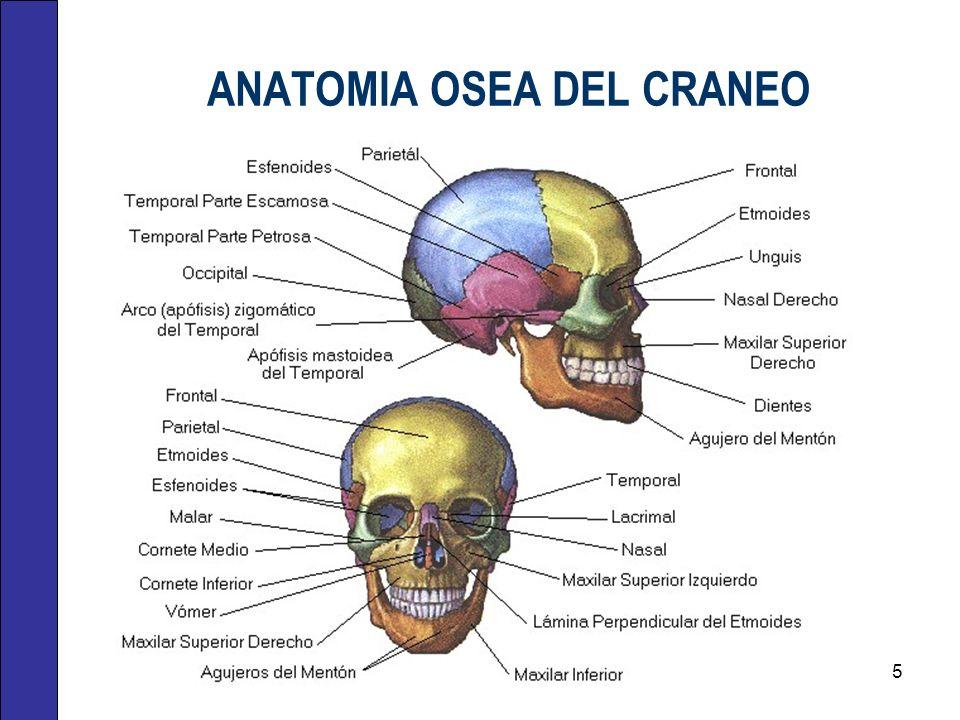 ANATOMIA OSEA DEL CRANEO