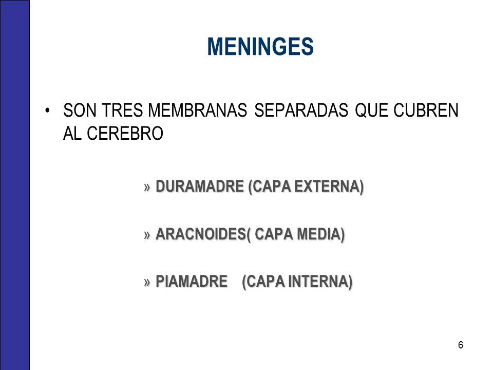 MENINGES SON TRES MEMBRANAS SEPARADAS QUE CUBREN AL CEREBRO