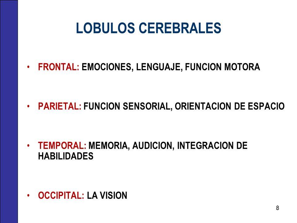 LOBULOS CEREBRALES FRONTAL: EMOCIONES, LENGUAJE, FUNCION MOTORA