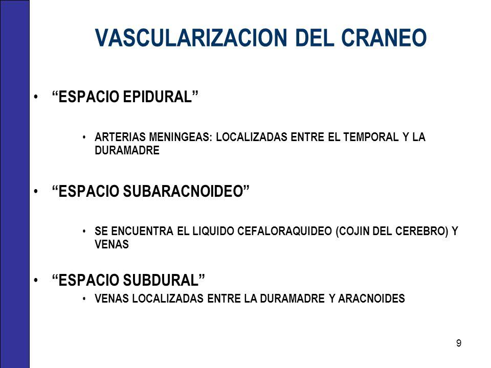 VASCULARIZACION DEL CRANEO