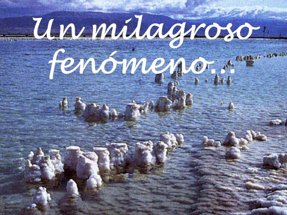 Un milagroso fenómeno... Hoy las sales del mar muerto son mundialmente reconocidas por sus.