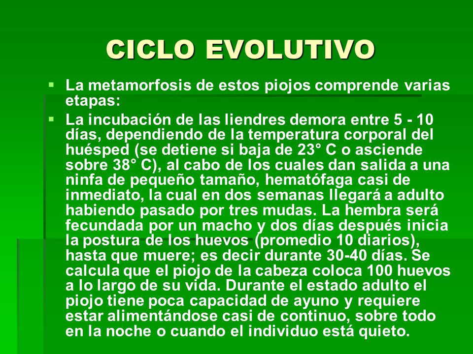 CICLO EVOLUTIVO La metamorfosis de estos piojos comprende varias etapas: