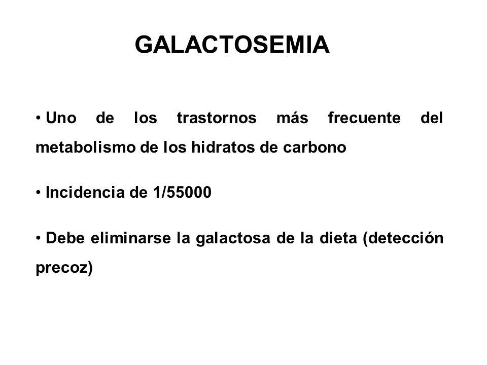 GALACTOSEMIA Uno de los trastornos más frecuente del metabolismo de los hidratos de carbono. Incidencia de 1/55000.