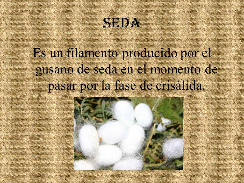 SEDA Es un filamento producido por el gusano de seda en el momento de pasar por la fase de crisálida.