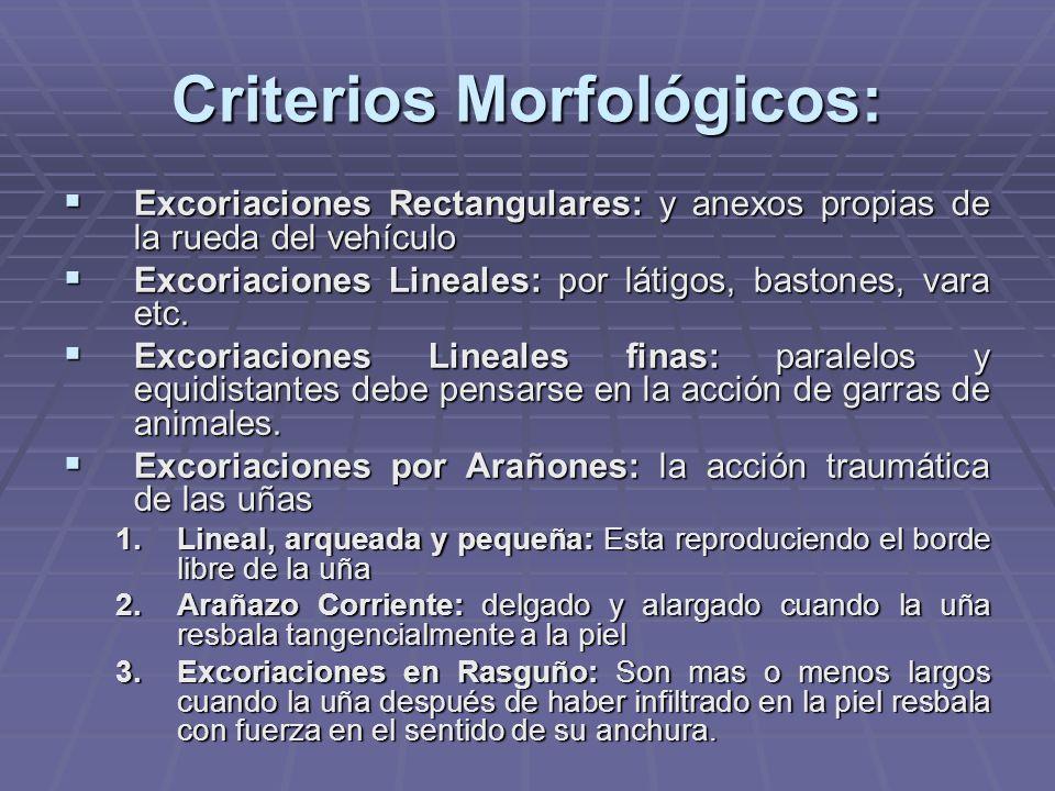 Criterios Morfológicos: