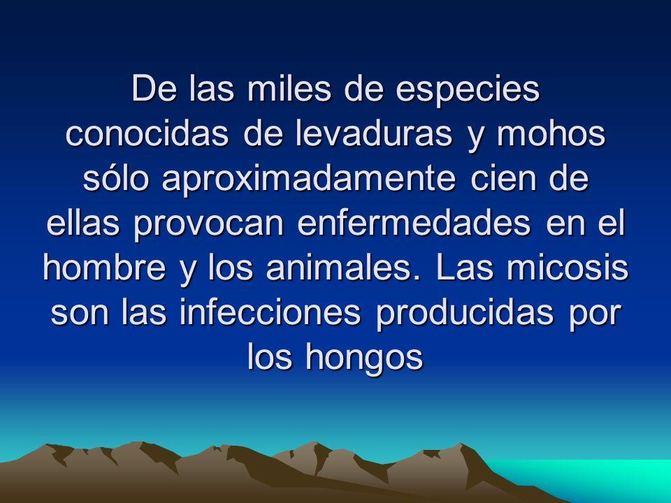 De las miles de especies conocidas de levaduras y mohos sólo aproximadamente cien de ellas provocan enfermedades en el hombre y los animales.