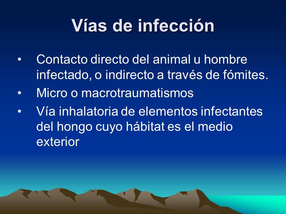 Vías de infección Contacto directo del animal u hombre infectado, o indirecto a través de fómites. Micro o macrotraumatismos.