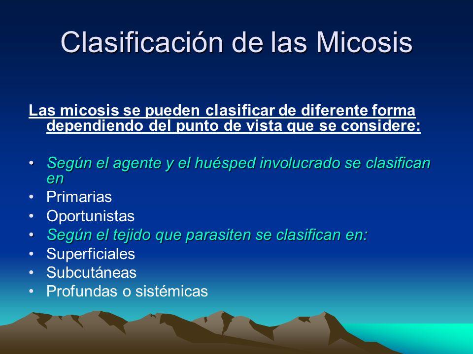 Clasificación de las Micosis