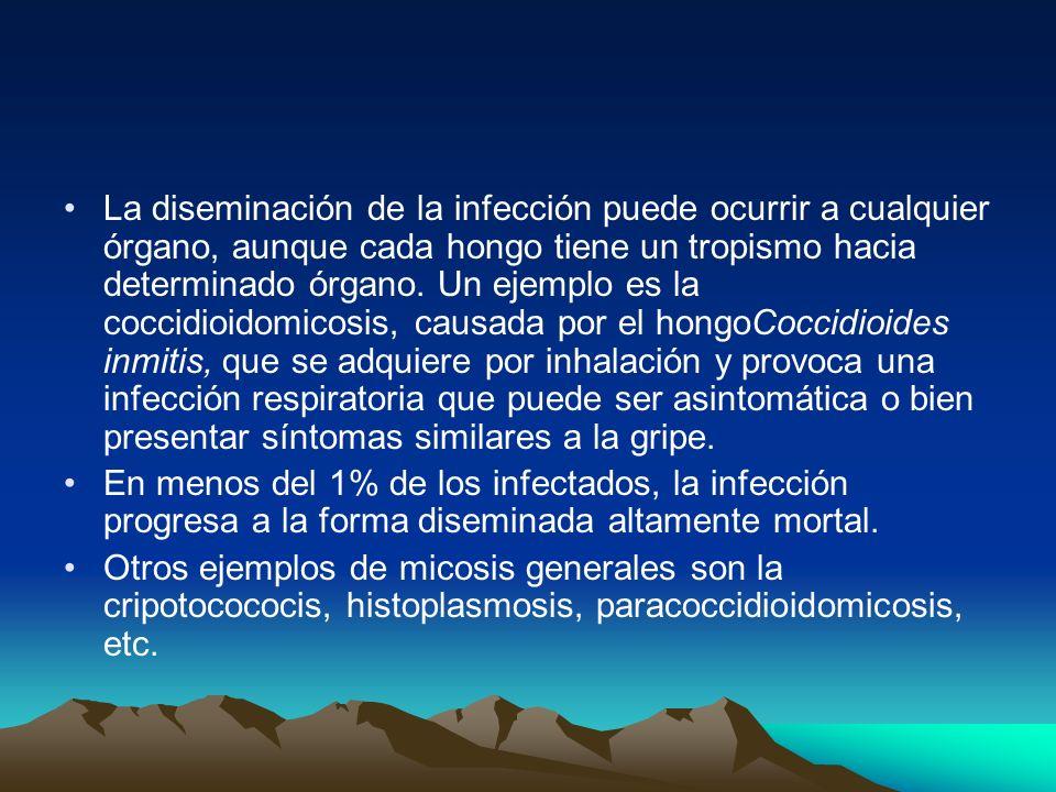 La diseminación de la infección puede ocurrir a cualquier órgano, aunque cada hongo tiene un tropismo hacia determinado órgano. Un ejemplo es la coccidioidomicosis, causada por el hongoCoccidioides inmitis, que se adquiere por inhalación y provoca una infección respiratoria que puede ser asintomática o bien presentar síntomas similares a la gripe.