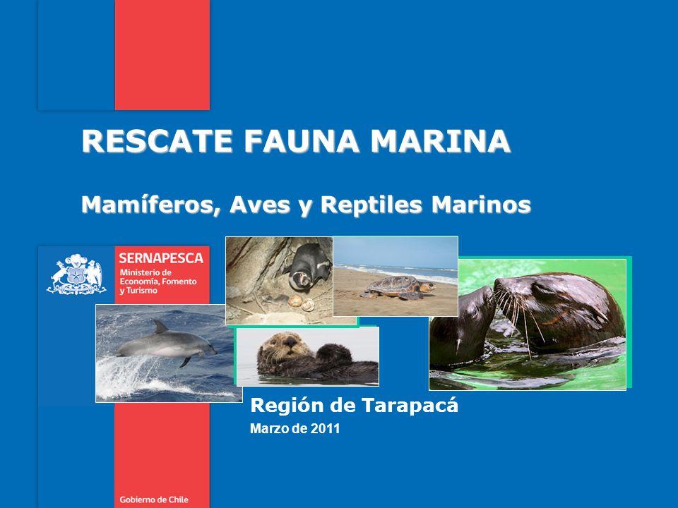 Mamíferos, Aves y Reptiles Marinos