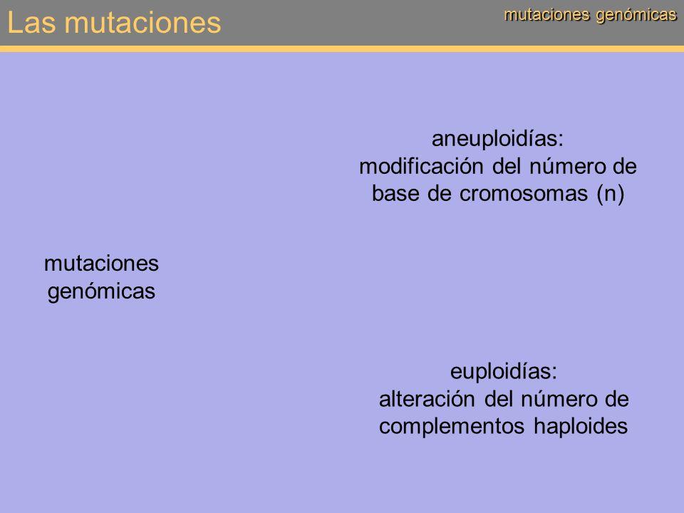 Las mutaciones aneuploidías: