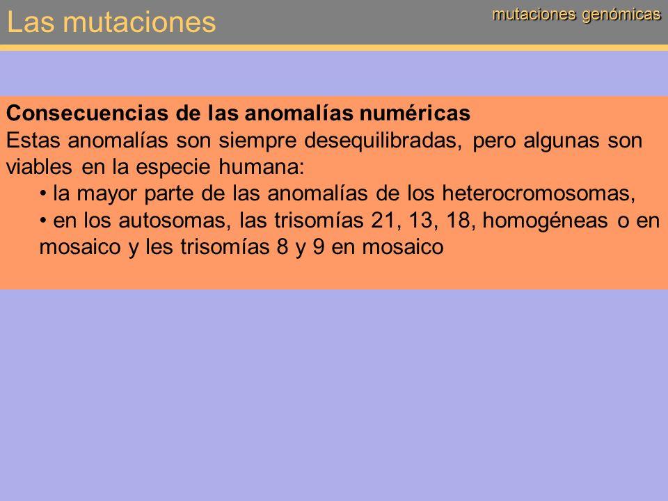 Las mutaciones Consecuencias de las anomalías numéricas