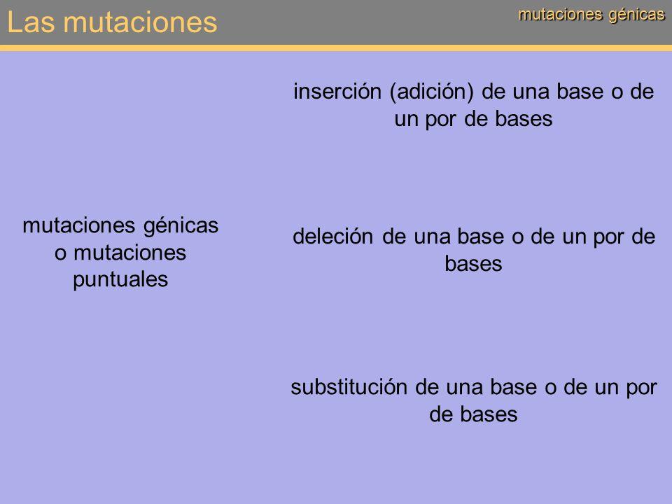 Las mutaciones inserción (adición) de una base o de un por de bases
