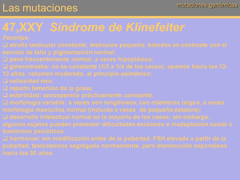 47,XXY Síndrome de Klinefelter