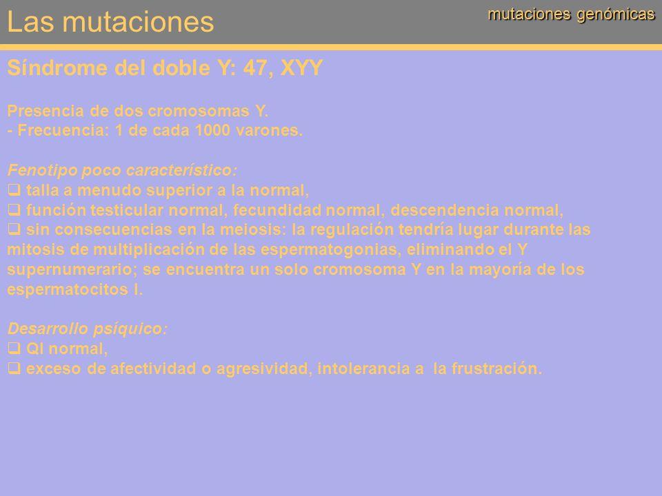 Las mutaciones Síndrome del doble Y: 47, XYY mutaciones genómicas