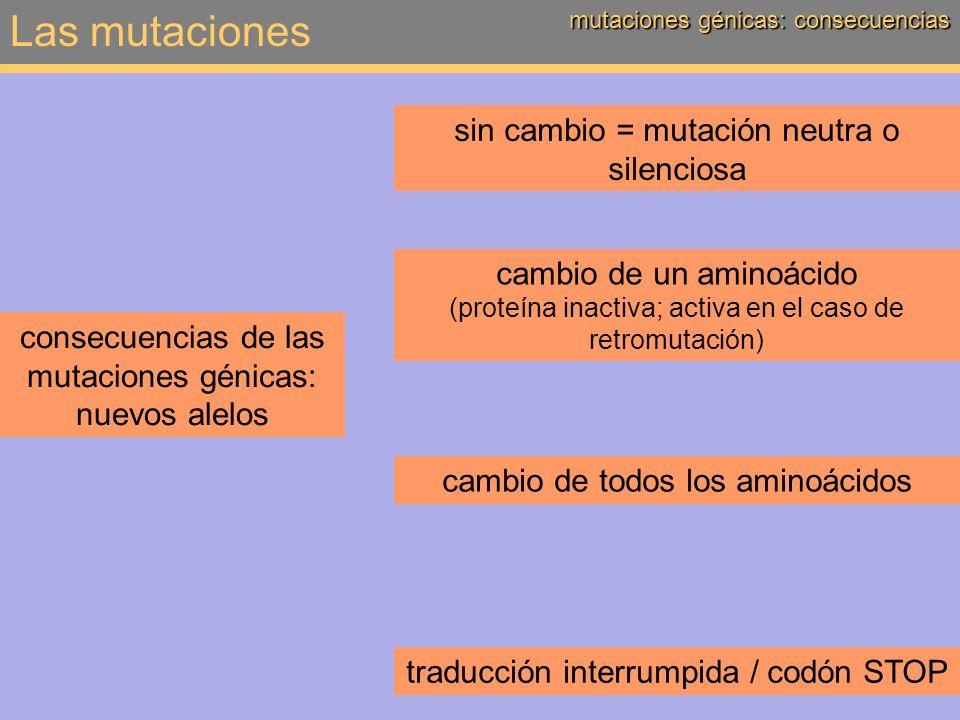 Las mutaciones sin cambio = mutación neutra o silenciosa