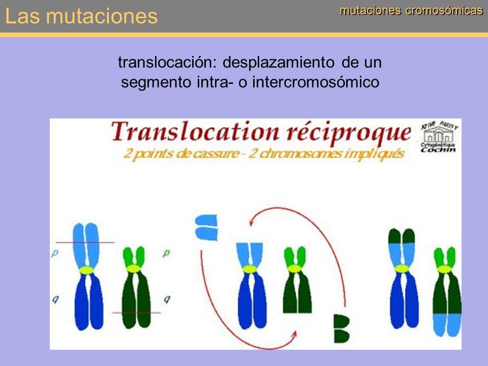translocación: desplazamiento de un segmento intra- o intercromosómico