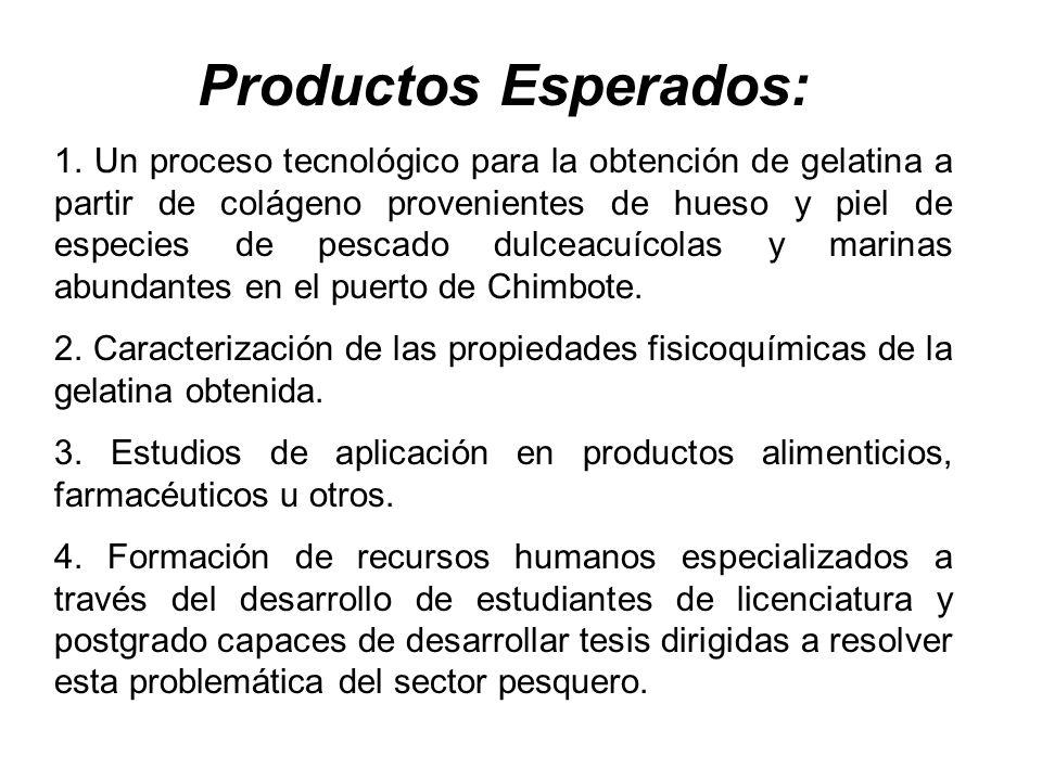 Productos Esperados: