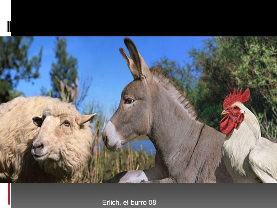 Erlich, el burro 08