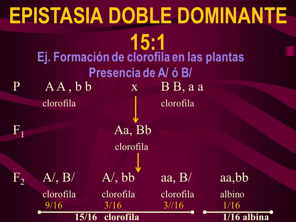 EPISTASIA DOBLE DOMINANTE 15:1