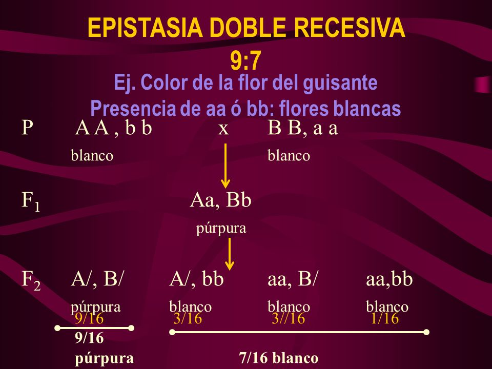 EPISTASIA DOBLE RECESIVA 9:7
