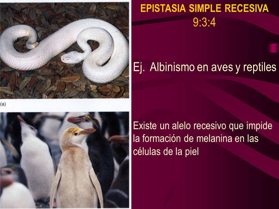 Ej. Albinismo en aves y reptiles