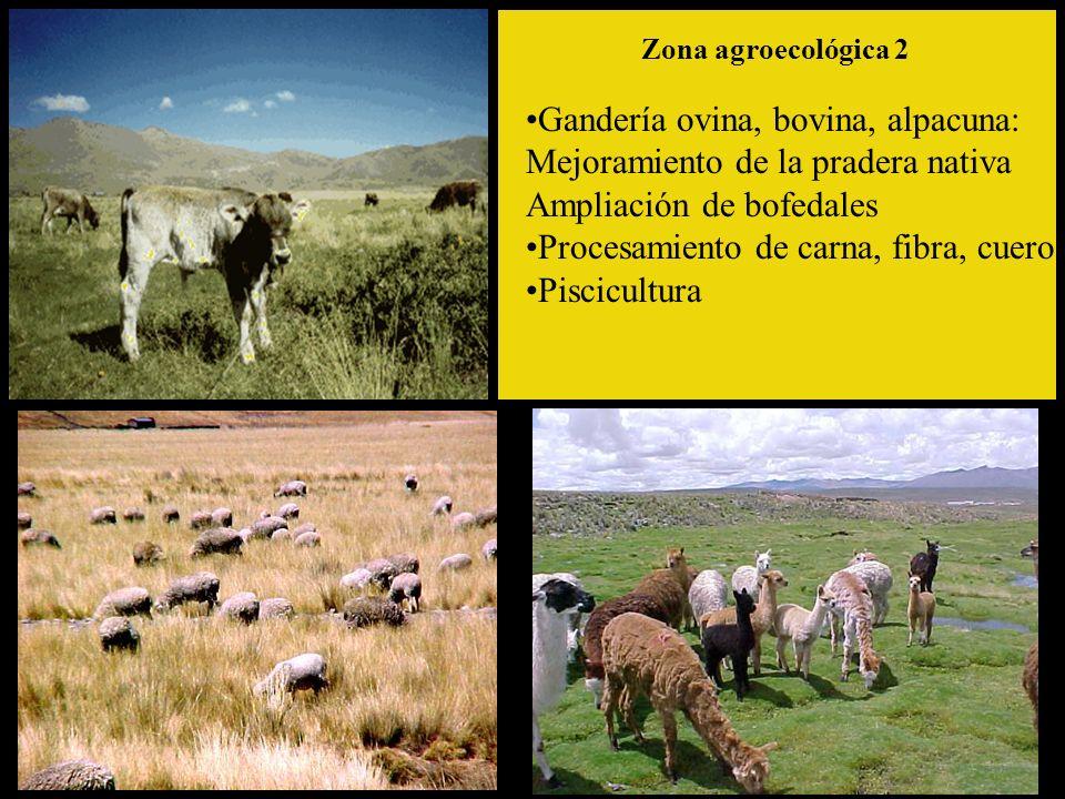 Gandería ovina, bovina, alpacuna: Mejoramiento de la pradera nativa
