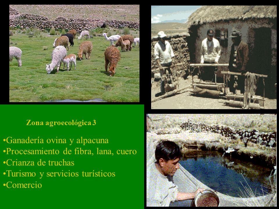 Ganadería ovina y alpacuna Procesamiento de fibra, lana, cuero