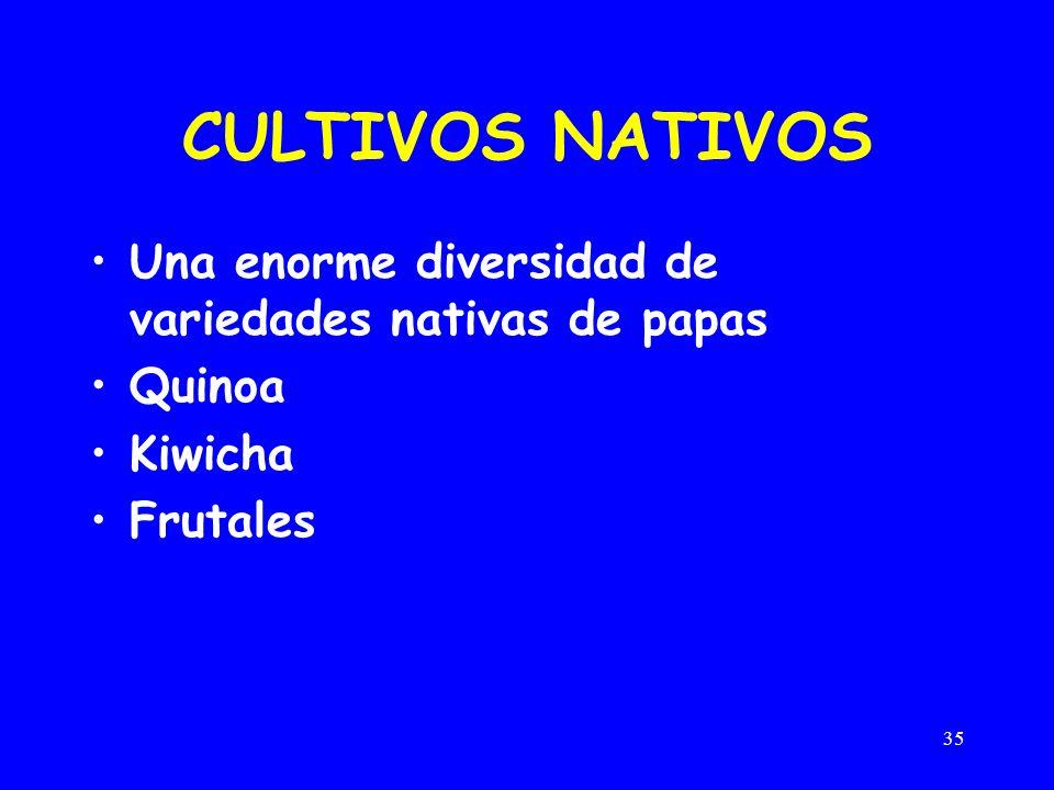 CULTIVOS NATIVOS Una enorme diversidad de variedades nativas de papas