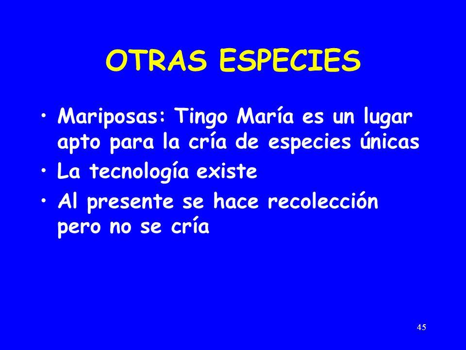 OTRAS ESPECIES Mariposas: Tingo María es un lugar apto para la cría de especies únicas. La tecnología existe.