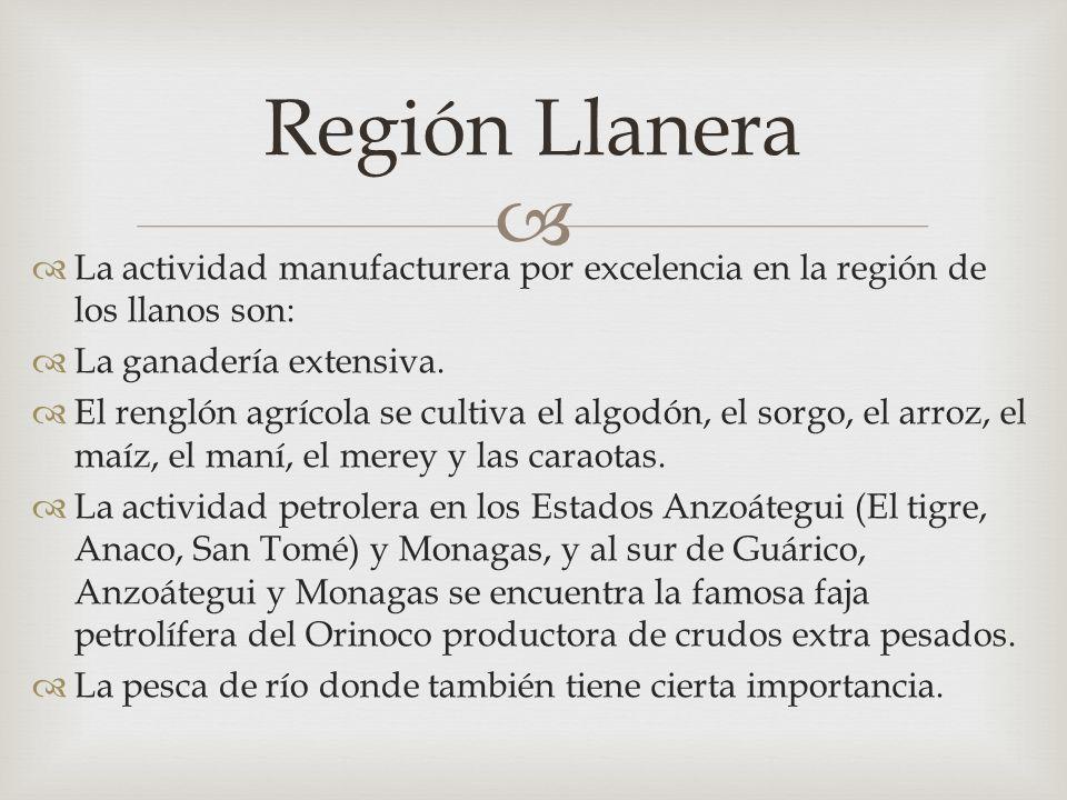 Región Llanera La actividad manufacturera por excelencia en la región de los llanos son: La ganadería extensiva.