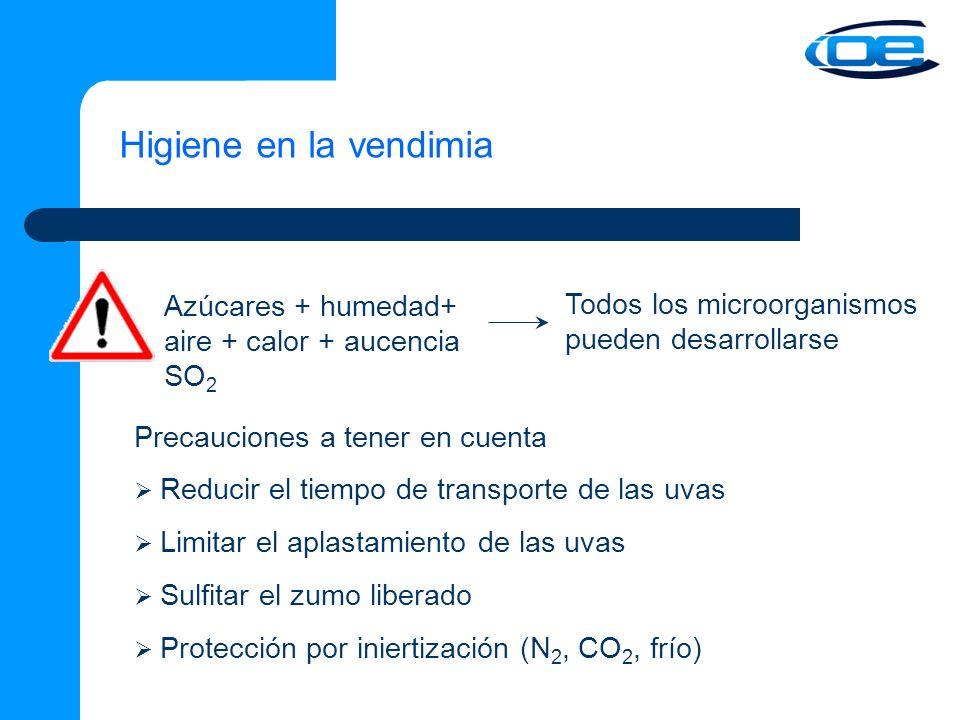 Higiene en la vendimia Azúcares + humedad+ aire + calor + aucencia SO2