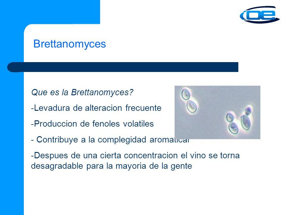 Brettanomyces Que es la Brettanomyces